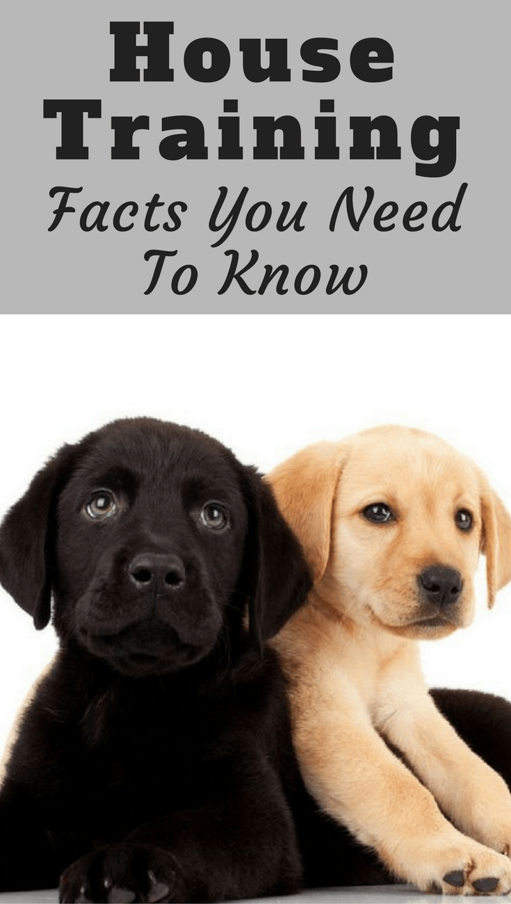 House training basic need to know facts before starting for What a dog needs