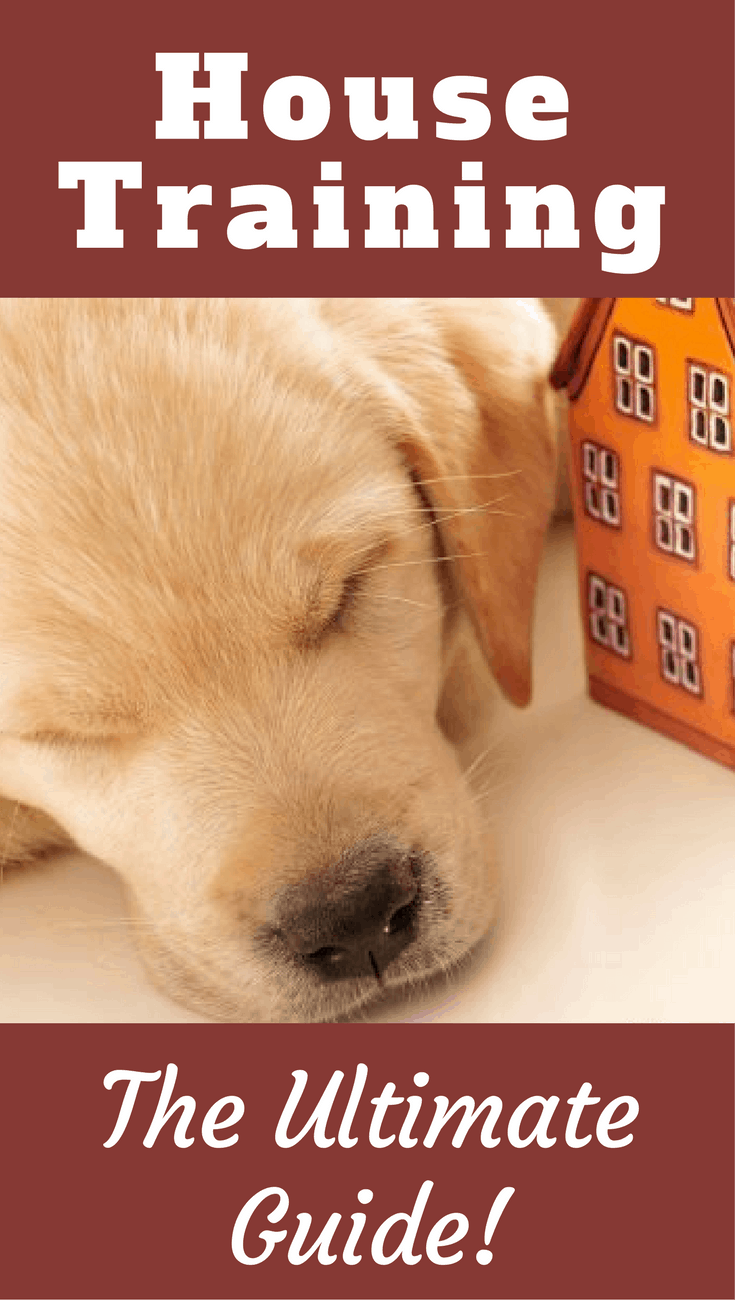 House training your dog or puppy is one the first, most important things you need to do. Get all the information you could ever need in this ultimate guide.