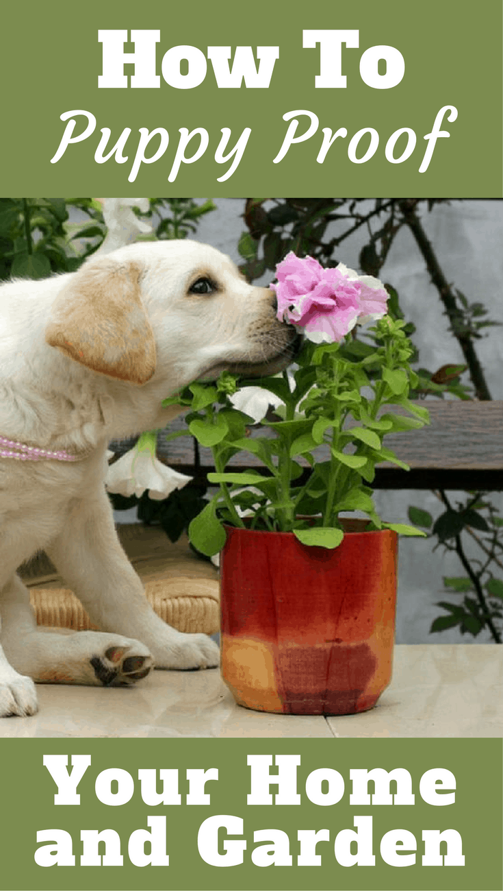 Learn All About Puppy Proofing Your Home And Garden In Our Expert Guide To Keep