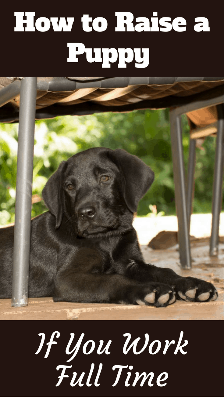 If you work full time, raising a puppy can be difficult, there's no getting around this fact, but it can be done with the tips and advice in our guide.