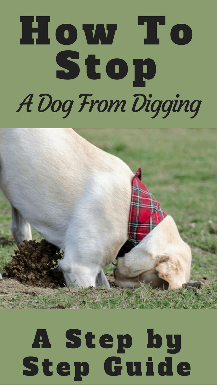 how to stop a dog from digging a step by step guide