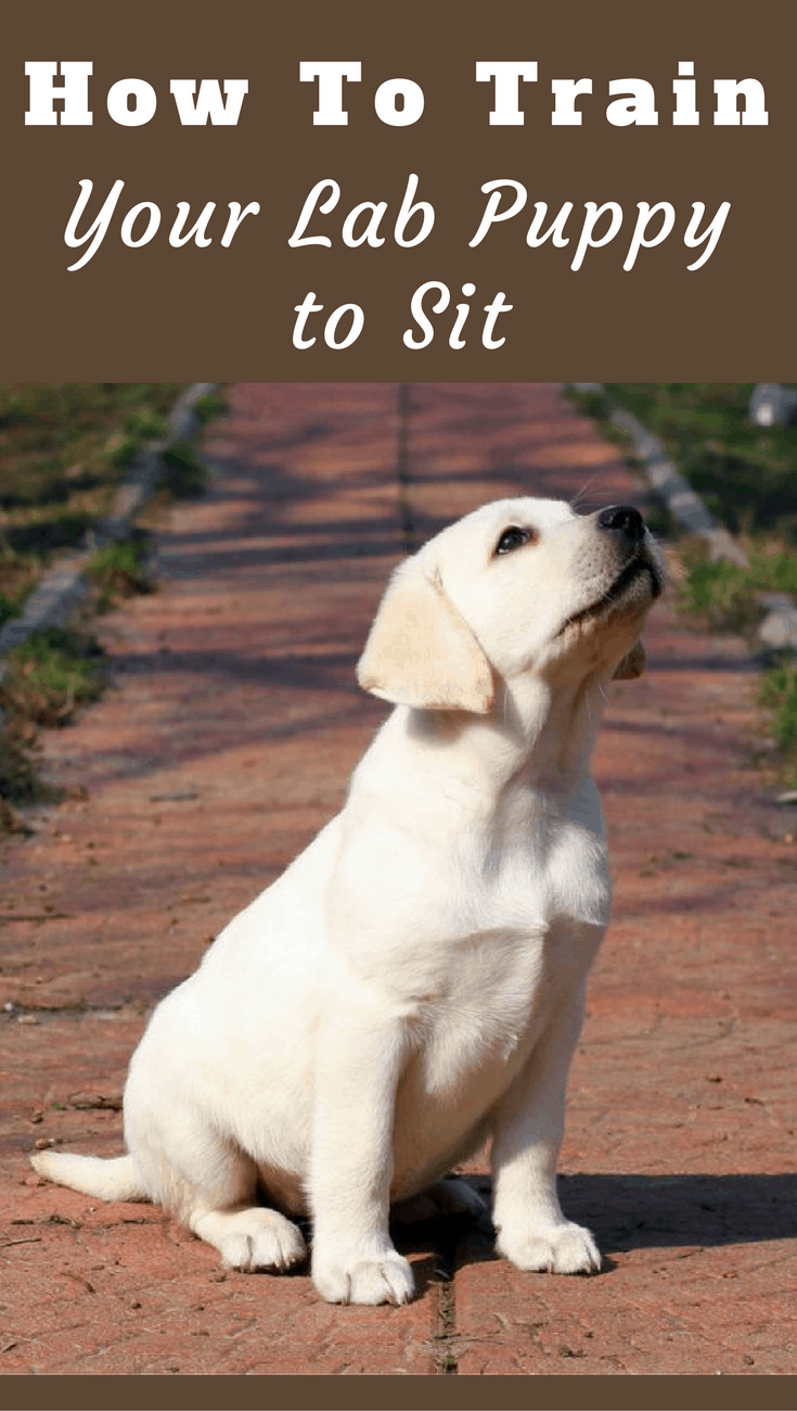 A sitting dog doesn't move, they cannot wander into danger or trouble. You need this level of control. Learn how to teach your dog to sit in this guide.