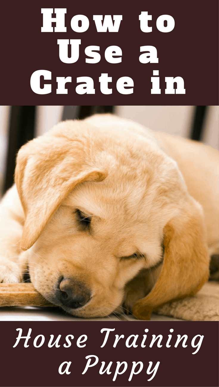 Using a crate during house training is the most effective method there is. Learn how to use a crate to house train a puppy and why it's so effective.