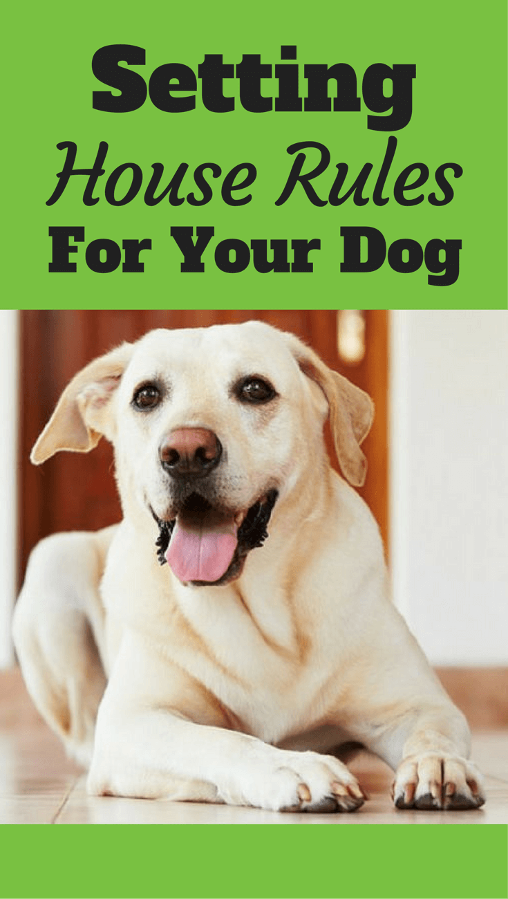 Setting and consistently sticking to house rules for your dogs helps them know how to behave and can prevent many problems forming. Click to read more...