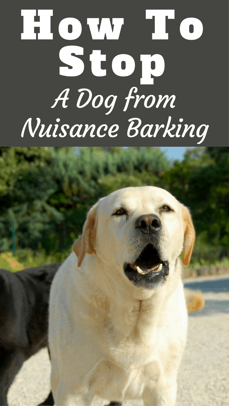 How to Stop a Dog from Barking - Labrador Training HQ