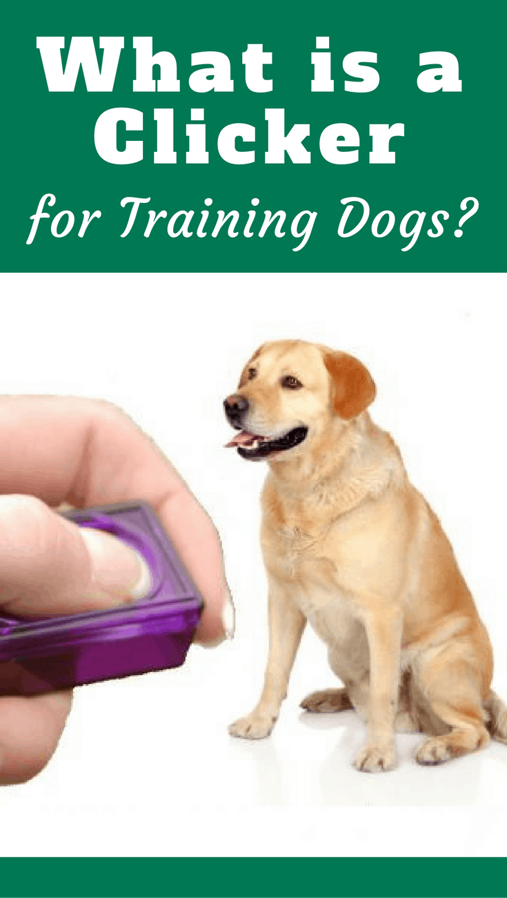 What is a clicker? It's a small device that clicks when pressed, used to communicate to your dog precisely when a behavior performed is the one we want.