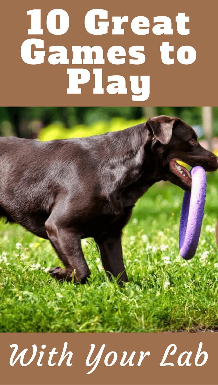 We've rounded up 10 of the best games you can play with your Lab at any age. All it takes is a bit of your time every day to have a happy, healthy dog.