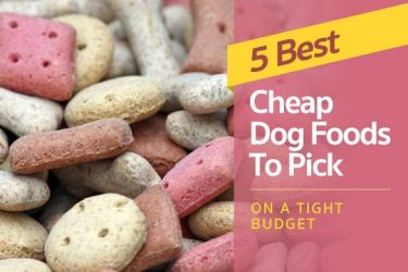5 Best Cheap Dog Food To Pick On A Tight Budget