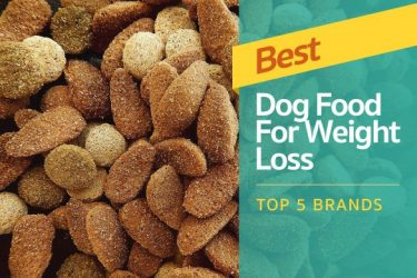 Best Dog Food For Weight Loss: Top 5 Brands