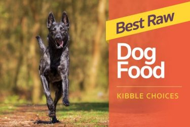 Best Raw Dog Food Kibble Choices to Make