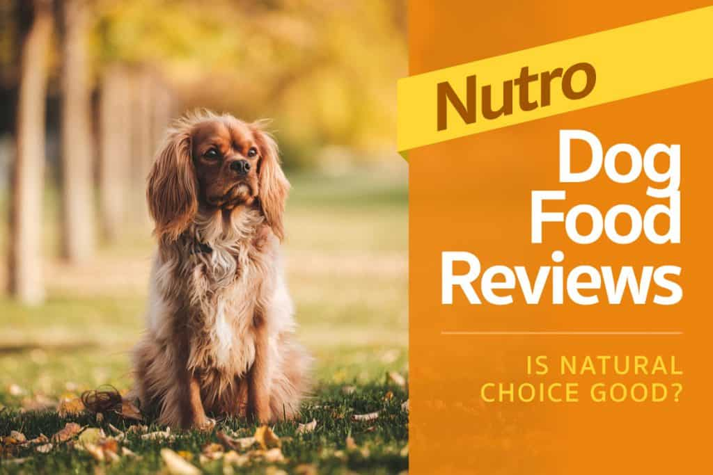Nutro Dog Food Review - Is Natural Choice Good? (2017 Rating)
