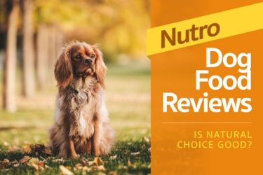 Nutro Dog Food Review — Is Natural Choice Good? (2020 Ratings)