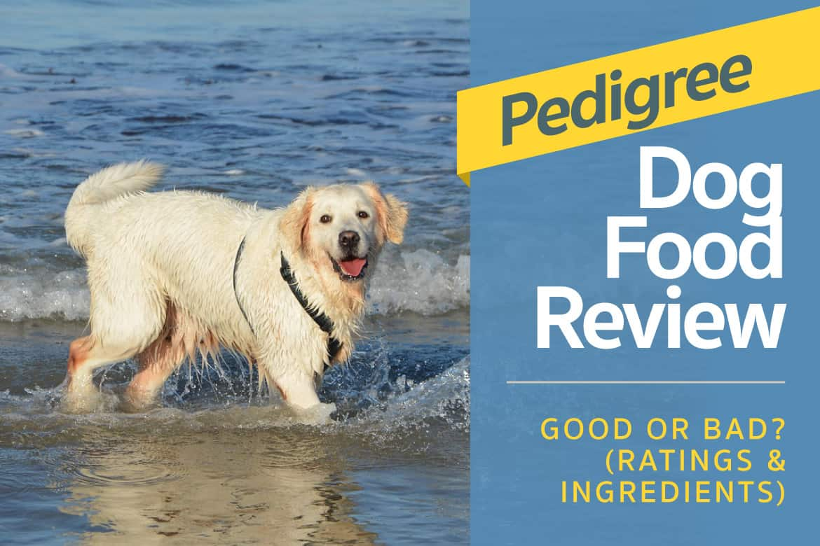 Pedigree Dog Food Review Good Or Bad Ratings Ingredients