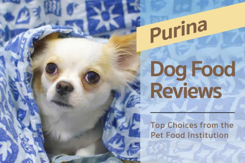 Is Purina Dog Chow Good For Puppies