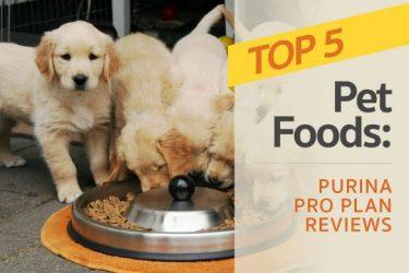 Purina Pro Plan Reviews: The Brand's Top 5 Pet Foods