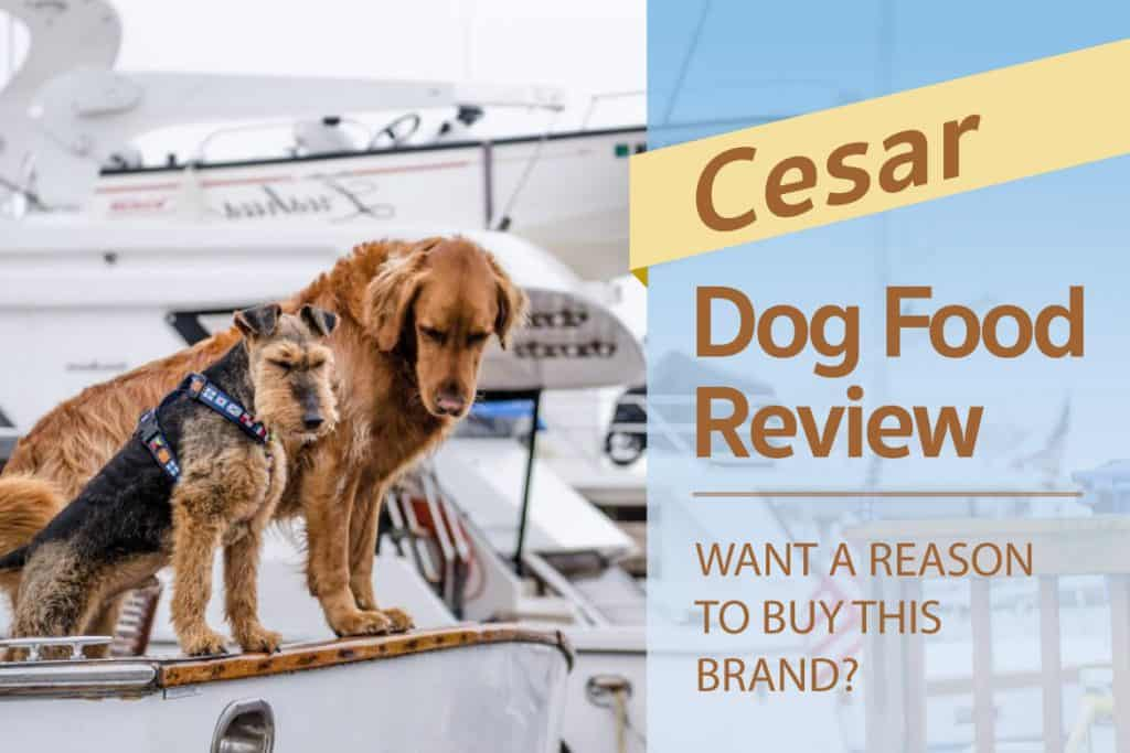 Cesar Dog Food Review Want A Reason To Buy This Brand