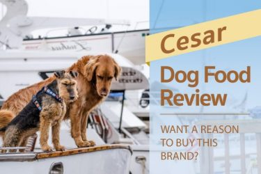 Cesar Dog Food Review: Want a Reason to Buy this Brand?