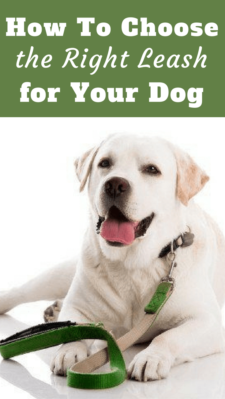 Learn how to choose the best dog leash for everyday use, for different training scenarios and different stages in your Labrador's life.