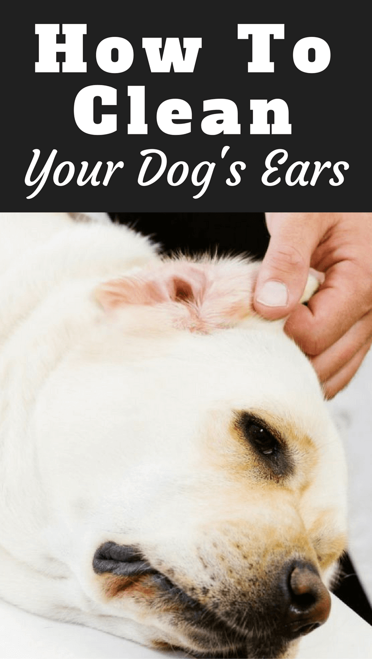 What Does It Mean When A Dog S Ears Down