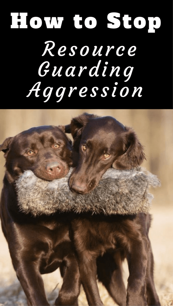 Is resource guarding between your dogs causing you stress and anxiety? This article will help you take steps to manage, correct and stop the behavior.