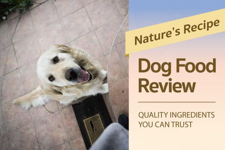 Nature's Recipe Dog Food Review: Quality Ingredients You Can Trust