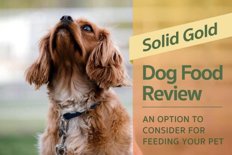 Solid Gold Holistic Dog Food