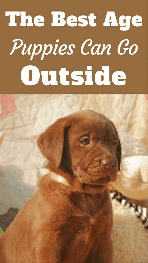 It's recommended very young puppies aren't allowed to run free outside right away. But when can puppies go outside and be given free roam?
