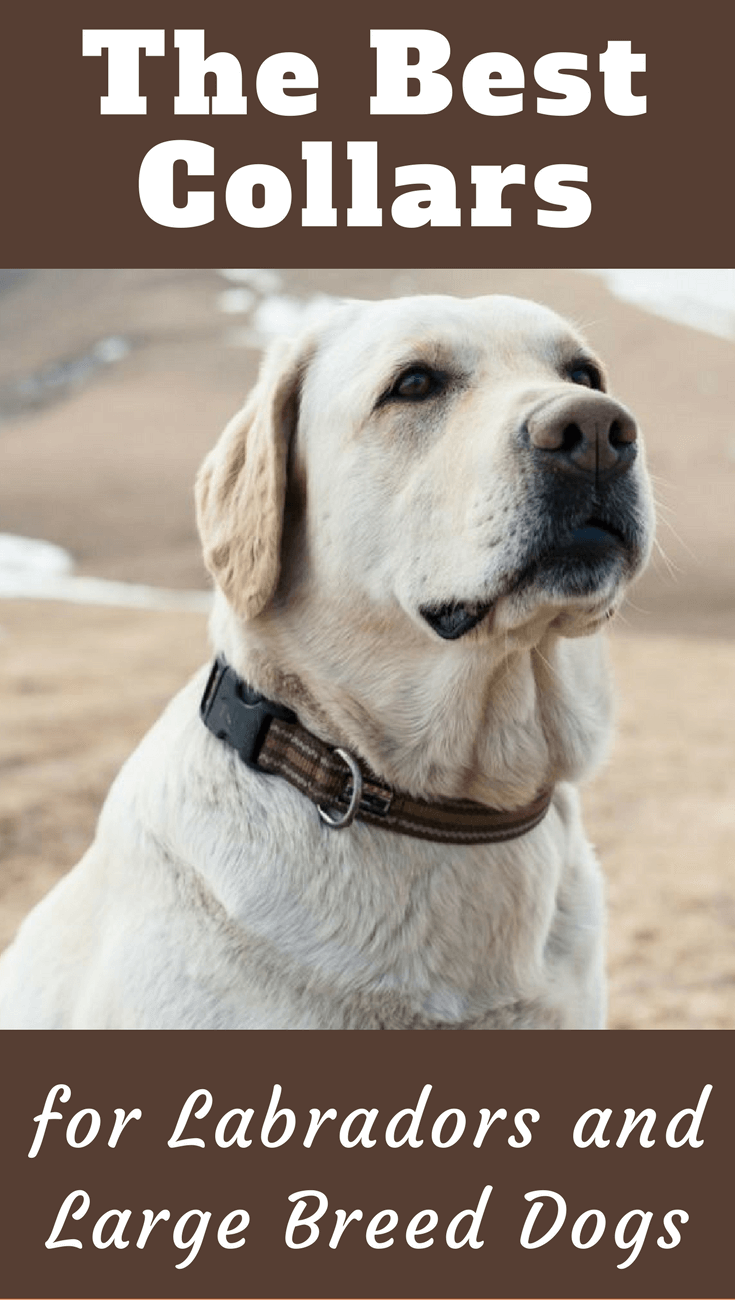 We've put together here a list of some of the best collars for labradors and large breed dogs to help you make the right buying decision.