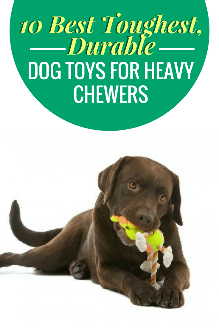 10 Best Toughest, Durable Dog Toys For Heavy Chewers | Dog Toys For Extreme Chewers