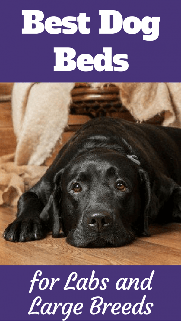 Best Dog Beds For Labradors
