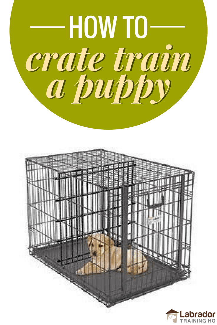 How To Crate Train A Puppy Day Night Even If You Work - Dog escapes from kennel to comfort abandoned crying puppies