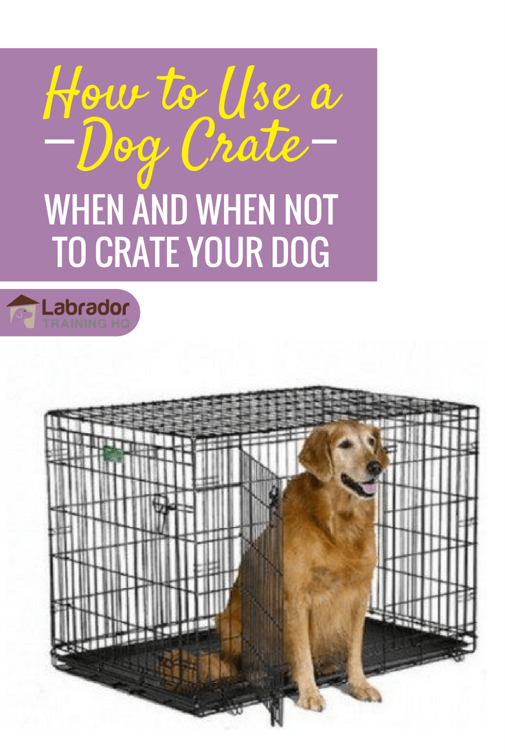 how to use a dog crate - How To Use a Dog Crate – When and When NOT To Crate Your Dog