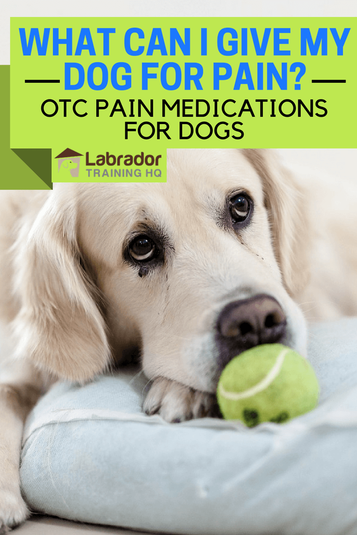 Dogs rarely complain when in pain, and we don't know where to start when trying to make them comfortable. We discuss OTC medications, do's and don'ts here.