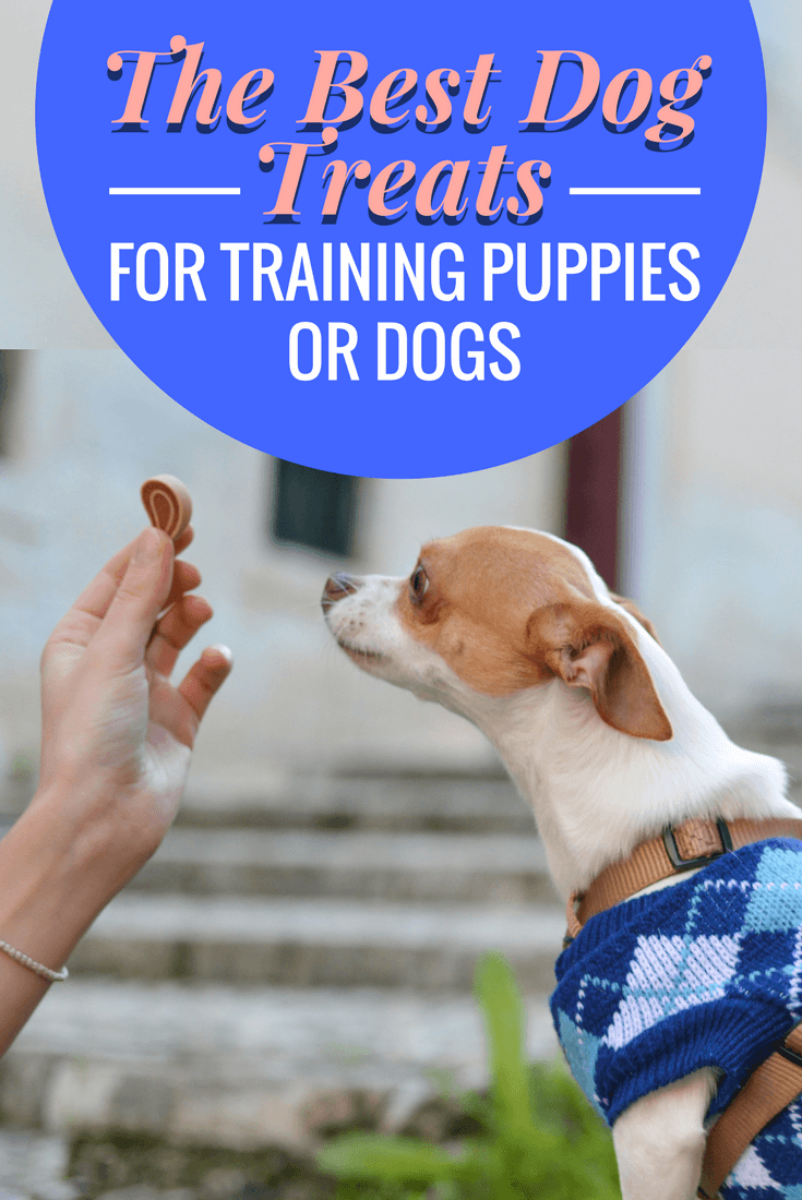 The best dog treats for training? You want a selection! Some low and some high-value, in flavors your dog goes mad for. We discuss 5 of the best here.