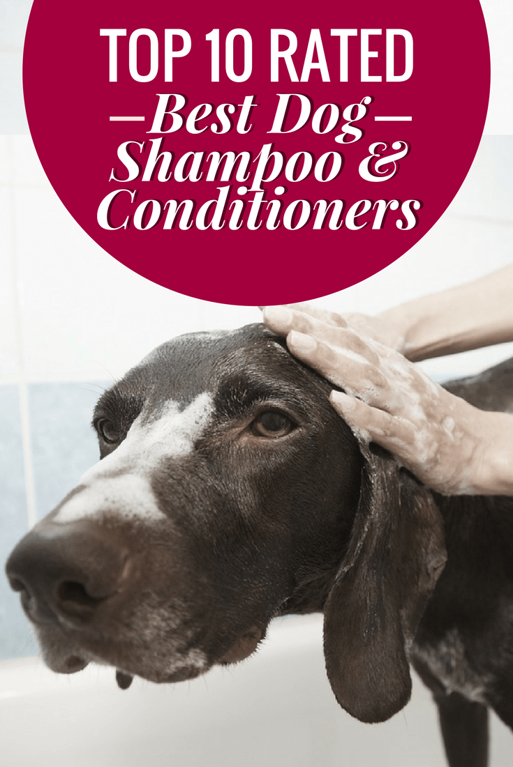 A round-up of 10 of the best dog shampoo and conditioners available on the market today. Some gentle, some heavy-duty, and some hypo-allergenic options too.