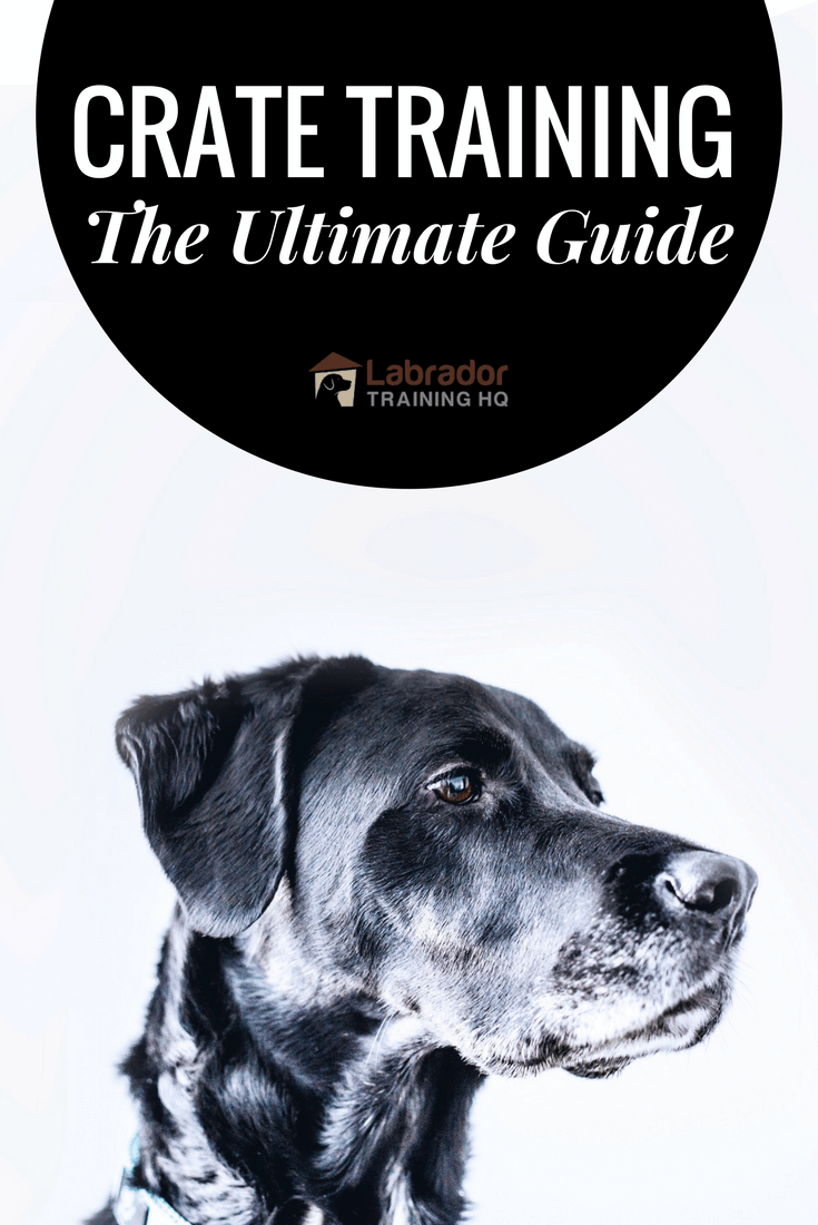 crate training the ultimate guide - Crate Training – The Ultimate Guide