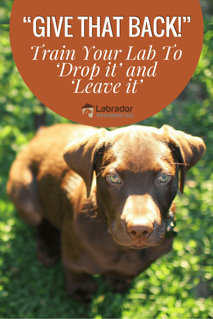 Teach your dog to 'drop it' and 'leave it' by following these simple instructions. Not just a trick, it can keep your belongings and your dog a lot safer.