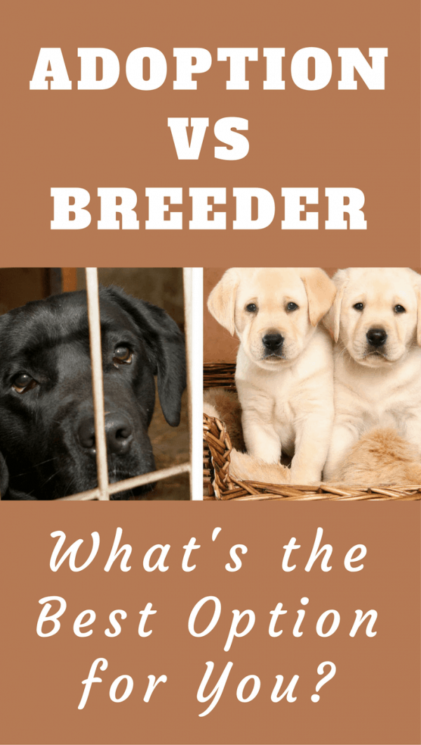 Adoption Vs Breeder: Should you buy from a breeder, or adopt from a shelter? It's a difficult decision. Let us help with the info in this article.