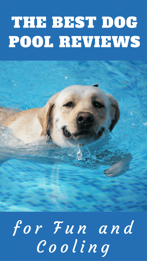 In hot weather, many dogs like to take a dip. Labradors? Well, in any and all weather! Find here some great value, well-featured pools for your pooch.