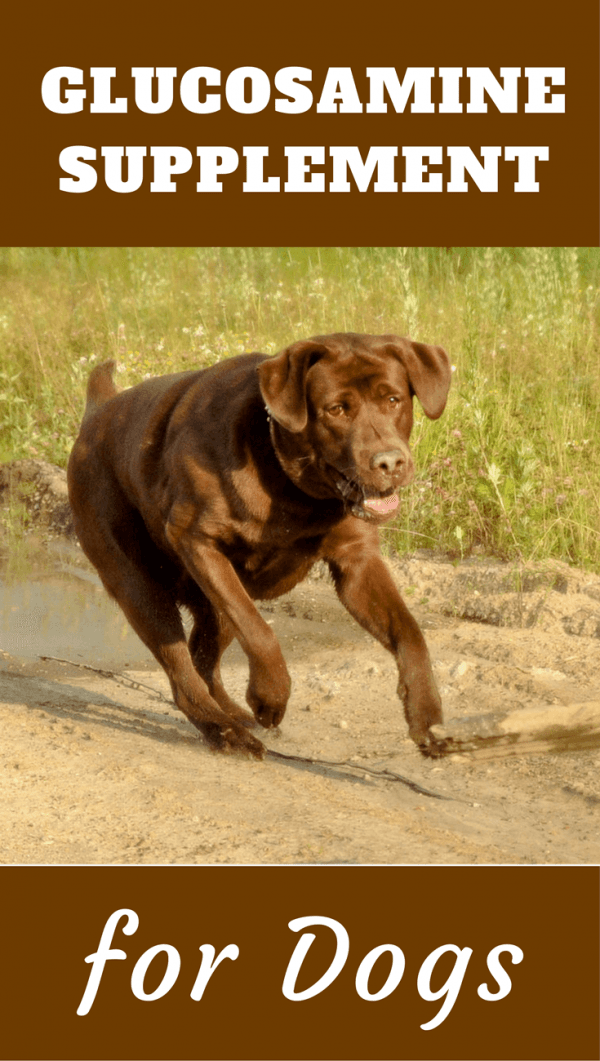 It's widely believed glucosamine for dogs helps promote healthy joint tissue and is a useful treatment for arthritis, hip and elbow dysplasia in dogs.