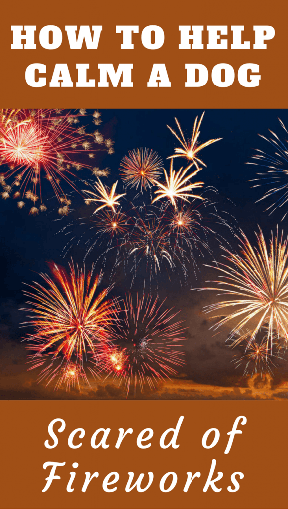 Dog scared of fireworks? This advice can help immediately on the day, and to solve the issue long term, with training, desensitization and popular products.