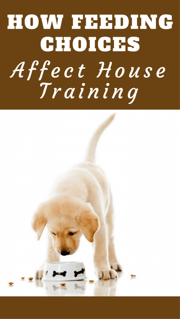 What you feed and how you feed your puppy has a massive influence on the house training process. This article will help you make the right decisions.