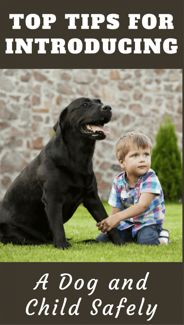 Introducing a dog to children must be done with the utmost safety in mind, to protect both dog and child. Learn best practise in our next guide.