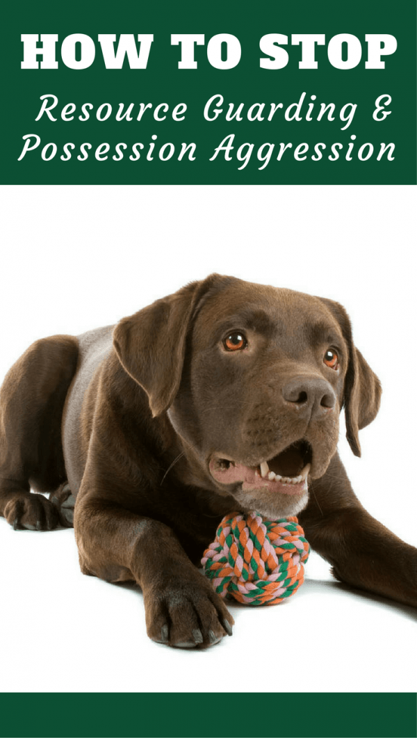 How To Stop Your Labrador Resource Guarding Food And