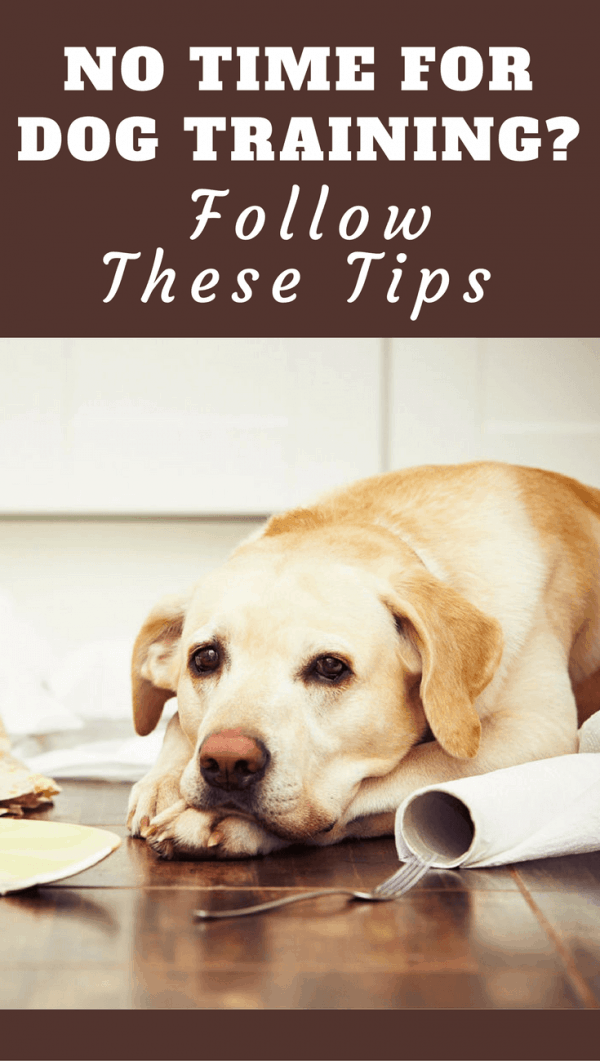 In our busy lives, time for dog training is one of the first things to suffer. But by following these tips, time for training can be found by anyone.