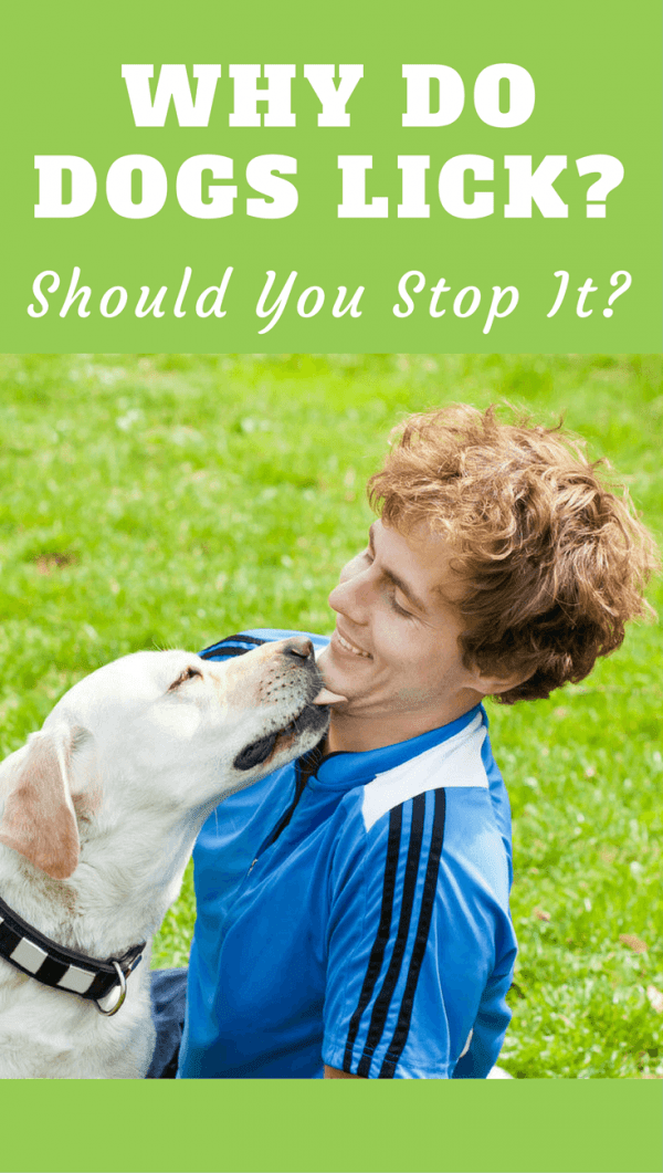 Why Do Dogs Lick Your Face Hands And Feet Should You