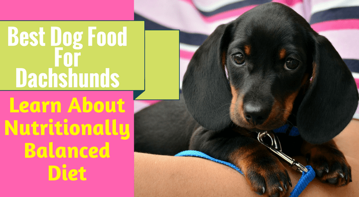 Best Dog Food For Dachshunds