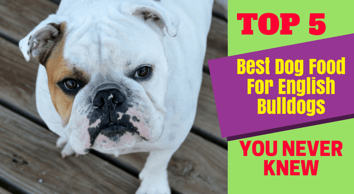 Best Dog Food For English Bulldogs - Top 5 Best Dog Food For English Bulldogs You Never Knew
