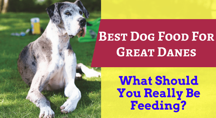 Cheap But Good Dog Food For Great Dane