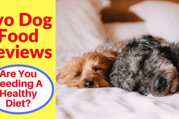 Evo Dog Food Reviews